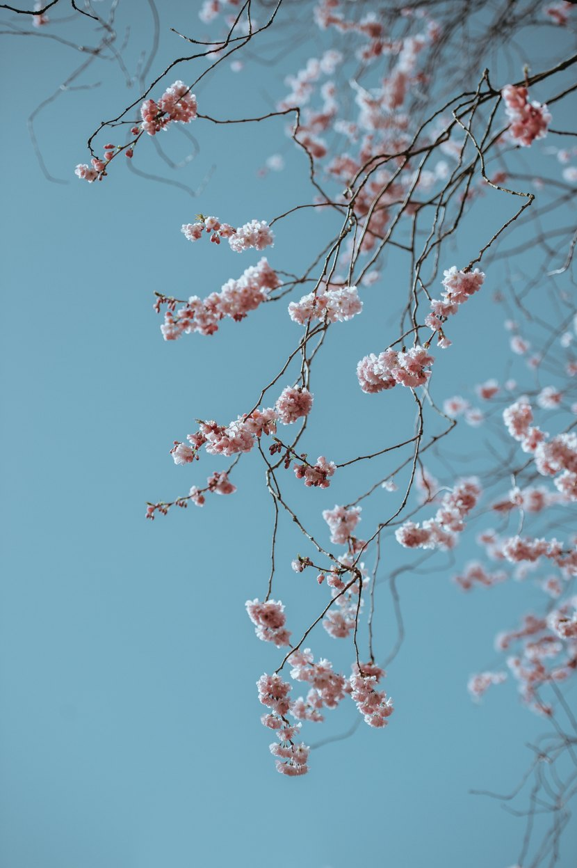 Spring On A Winter'sDay