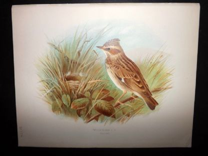 The Woodlark's Song (Poem)